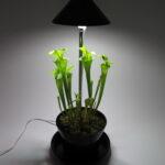 sunliteplantlamp1b